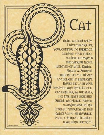 Cat Prayer Poster