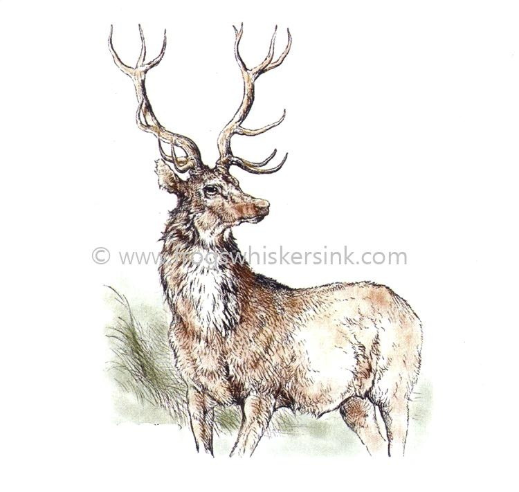Frog's Whiskers Ink Stamps - Highland Stag Small