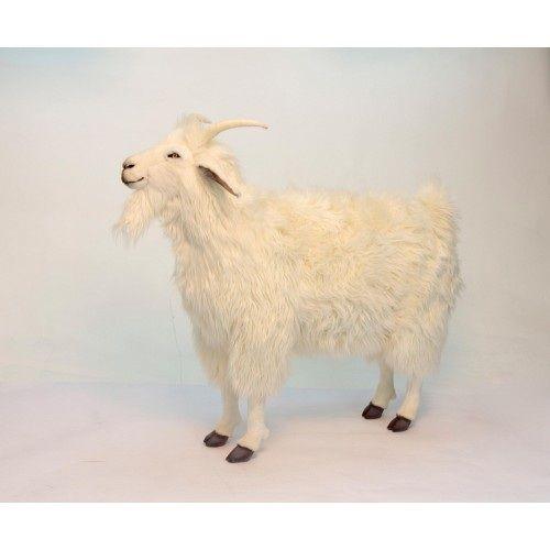 Cashmere Goat 42''