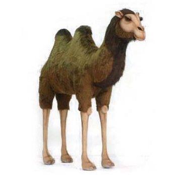 Camel Ex Lg 5'3''